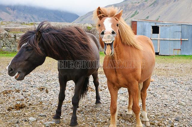Sức ngựa là gì