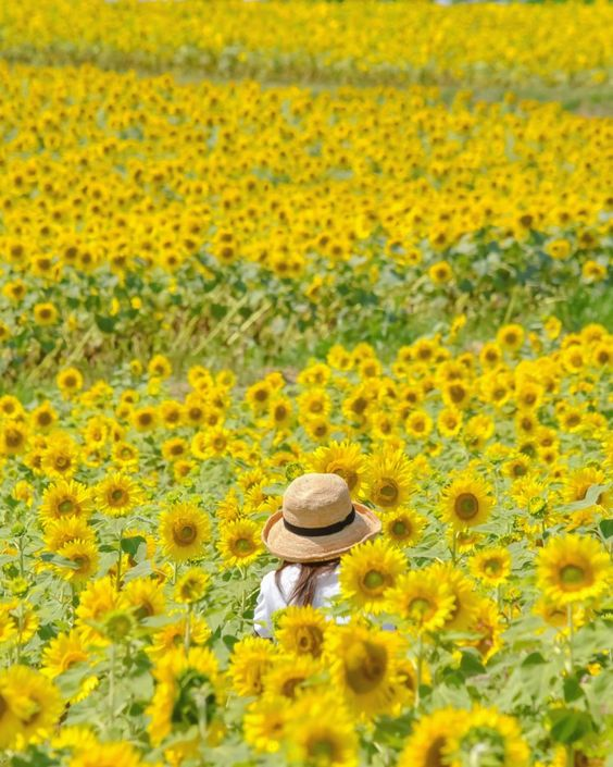 hình ảnh hoa đẹp làm ảnh bìa FB
