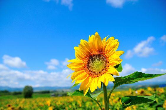 hình ảnh hoa đẹp làm avatar FB