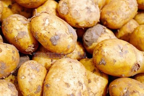 tẩy mốc bằng khoai tây